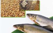 صادرات خوراک آماده آبزيان به کشورهای همسایه