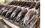 عرضه ماهی با تخفیف ۳۵ درصدی در نمایشگاههای بهاره