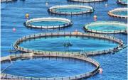پرورش ماهی در قفس نیازمند 8 هزار میلیاردتومان اعتباردر برنامه ششم توسعه