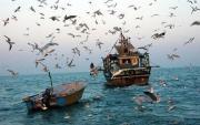 صید ماهی شوریده در خوزستان آزاد شد